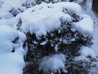 続・続今年の雪