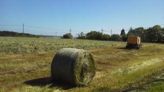 牧草収穫中