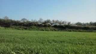 牧草成長中