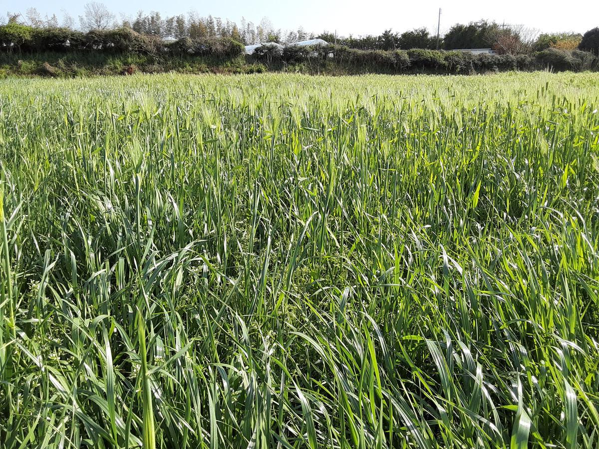 今日の牧草地